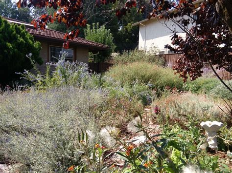 landscape design pleasant hill ca before and after wild bee garden design