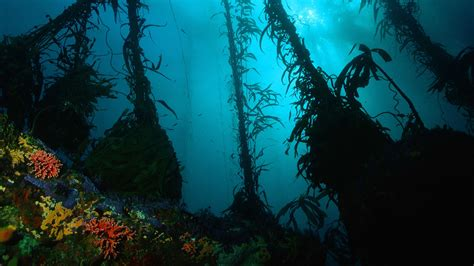 underwater hd wallpaper 1920x1080 underwater full hd wallpaper and background image