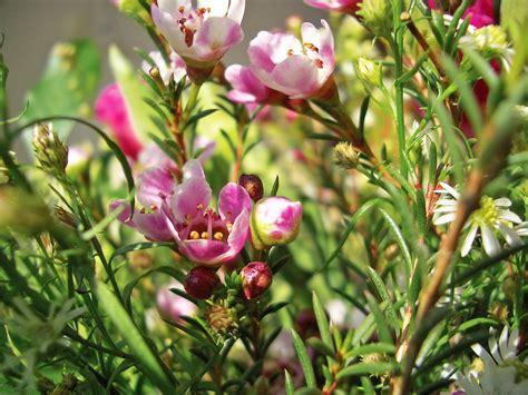 i fiori di bach a cosa servono terapia vibrazionale cosa sono a cosa servono e quali