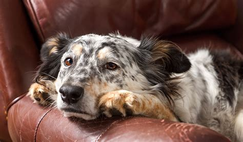 symptoms of dehydration in dogs 8 signs of dehydration in dogs you should