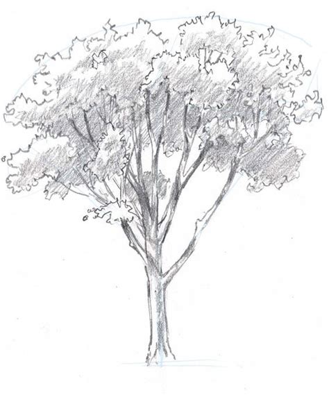 tree drawing simple 25 best how to draw trees ideas on trees