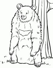 kodiak bear coloring page wild animal coloring pages kodiak bear standing up