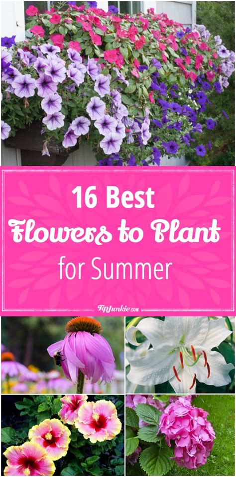 summer flowers the most popular blooms for every month 16 best flowers to plant for summer tip junkie