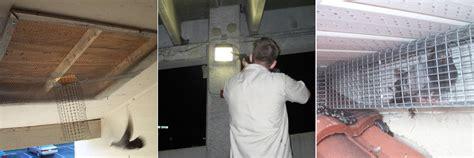 how do get rid of starlings postsstocksvi over blog com