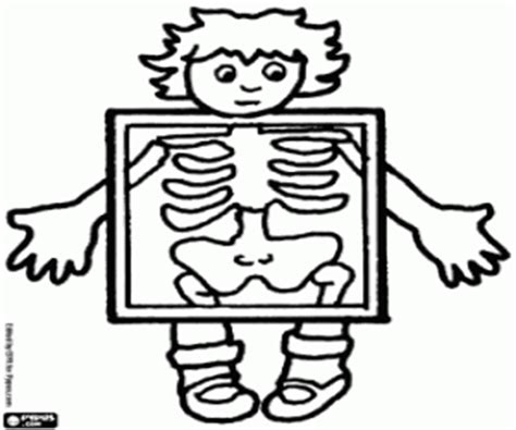 imagenes para colorear de rayos x juegos de cuerpo humano para colorear imprimir y pintar