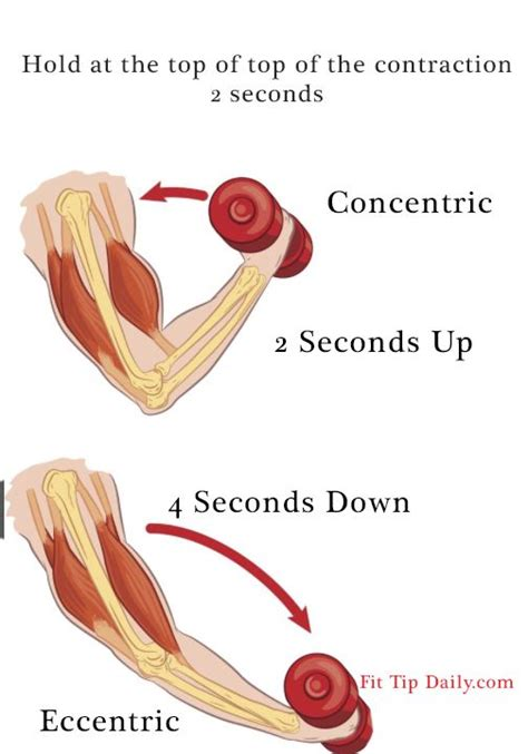 types of isotonic contraction 1 concentric tension in is great enough to overcome