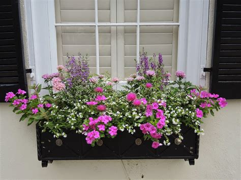 window box flower designs sun window box low water drought tolerant vinca