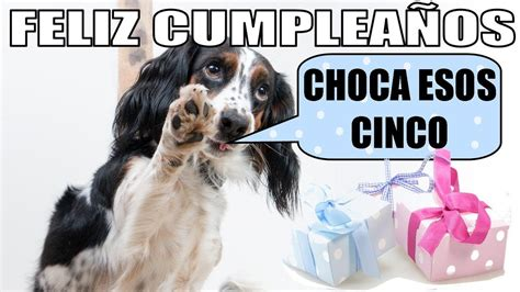 imagenes para una amiga perra meme cumplea 241 os perros youtube