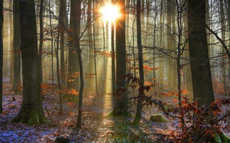 woods sunset wallpaper landscapes forest woods trunks sunlight sunrise sunset