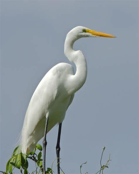 Birds Live On by Viva La Voyage Lake Nicaragua And Birds