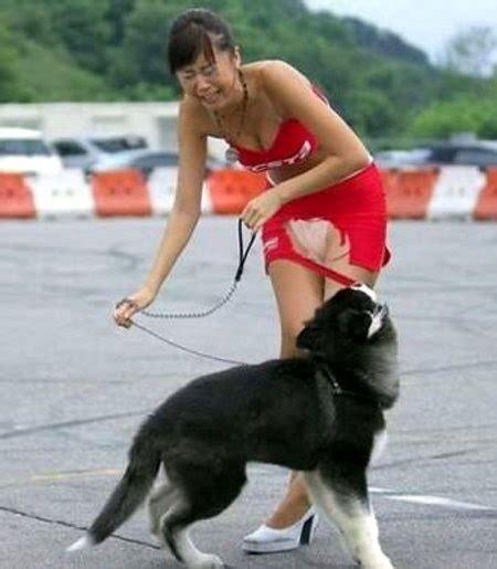 perro travieso perro travieso fotos de personas humor12
