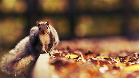 bing pictures as wallpaper squirrel squirrel wallpapers best wallpapers