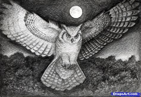 dibujos realistas buho how to draw a realistic owl draw a real owl step 19 art