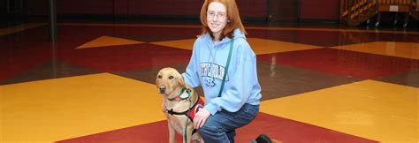 can dogs seizures seizure assist dogs can do canines