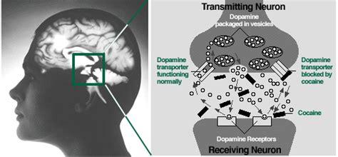 entrada medical transcription cocaine