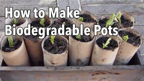 biodegradable plant pots growing containers for plants how to make biodegradable plant pots homemade seed