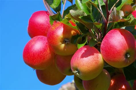 fruit tree care march fruit tree care reliable tree care