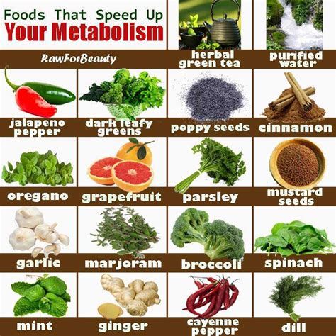 how to increase metabolism eco savy