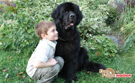 best dogs for small children the 5 best breeds for small children