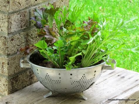 Lettuce Planter by Thrifted Colander Turned Lettuce Planter House Of Hawthornes