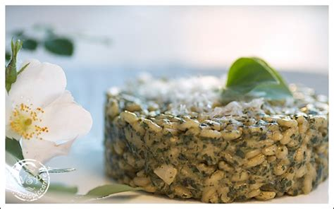 cucinare ortica ricette di cucina con ortica ricette popolari sito culinario
