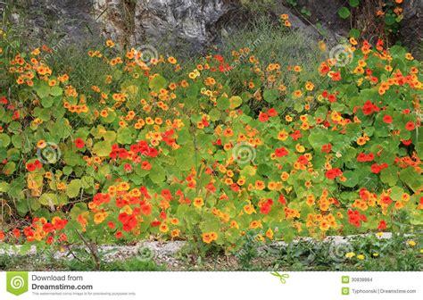 garden flowers a z mediterranean garden flowers stock images image 30838884