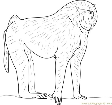 free printable coloring pages baboons free best free