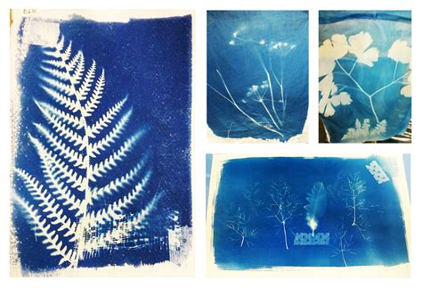 How To Make Cyanotype Paper - pootie