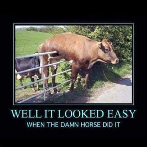 Funny Dirty Meme Pictures - damn horse funny pictures quotes memes funny images funny jokes funny photos