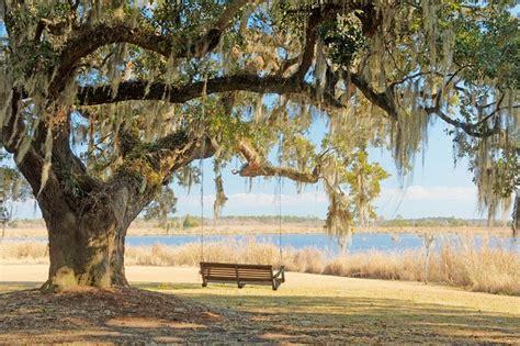 tree trunk swing oak tree with swing dream home pinterest