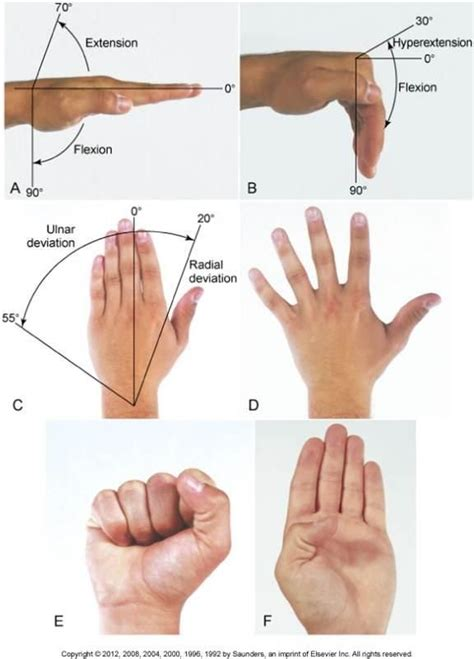 finger diagram normal rom of the wrist and reference chart fw i