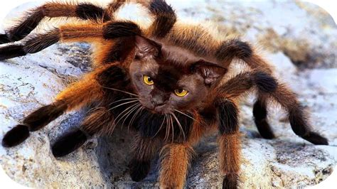 spider puppy better than mutant spider mutant spider cat