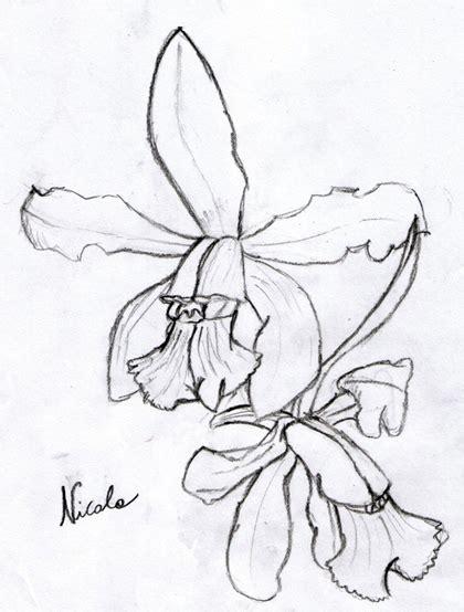 disegni di fiori a matita amazing disegni fiori a matita dy49 pineglen