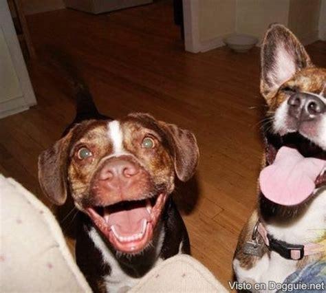 fotos animales riendose los animales tambien sonrien taringa