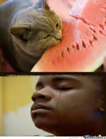 Watermelon Meme - watermelon cat by thurin meme center