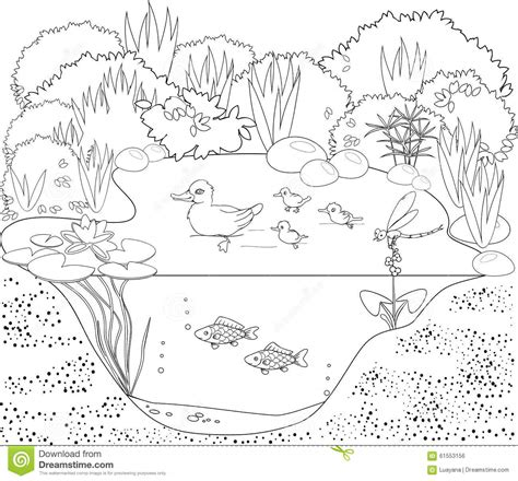 Coloring Pages Ducks In A Pond | coloring duck pond stock vector image 61553156