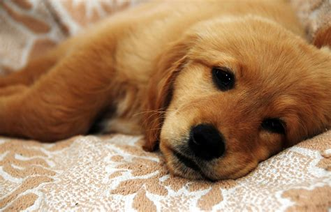 how to get rid of parvo in puppies how to get the parvo virus out of your house