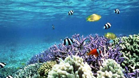 imagenes reales del fondo del mar fondo del mar wallpapers gratis imagenes paisajes