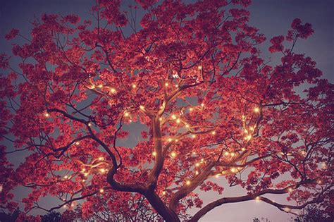 tree lights pictures autumn tree lights pictures photos and images for