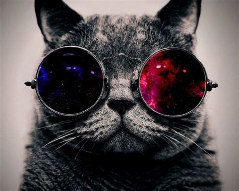 wallpaper cat with sunglasses wallpapers cats glasses x collection 9 wallpapers