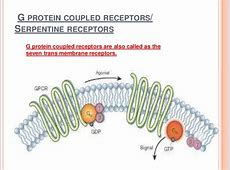 G protein coupled receptors G Protein Coupled Receptors Gpcrs
