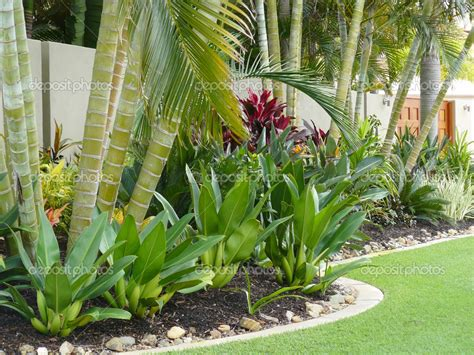 tropical backyard plants tropical patio plants red tropical garden border stock