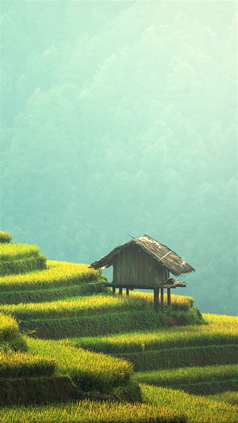 wallpaper terrace farming agriculture  photography