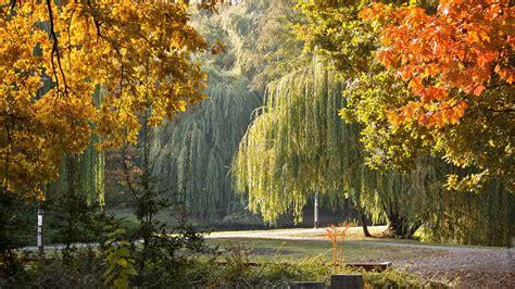 beautiful fall 4k hd desktop landscape 4k ultra hd wallpaper wallpaper 3840x2160 park