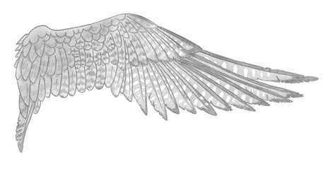 peregrine falcon tattoo designs peregrine style wing by mishi deviantart