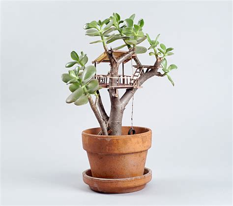 tiny indoor plants jedediah corwyn voltz builds tiny treehouses in succulent