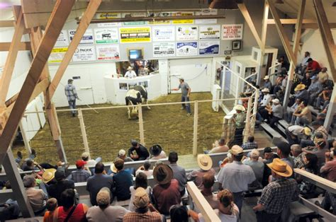 livestock auction image gallery livestock auction