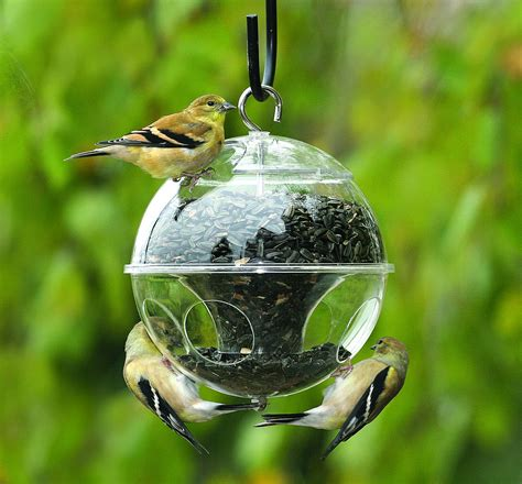 types of backyard birds choosing the right seed the backyard naturalist the