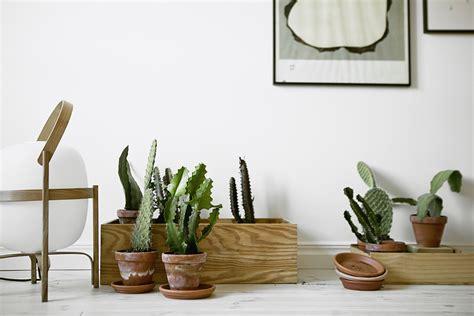 cactus para interior interior inspiration cactus cuteness xanns place