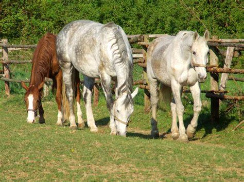 Wo Hängematte Kaufen by Pferde Bilderu De Ein Pferd Ein Pferd Ein K 246 Nigreich